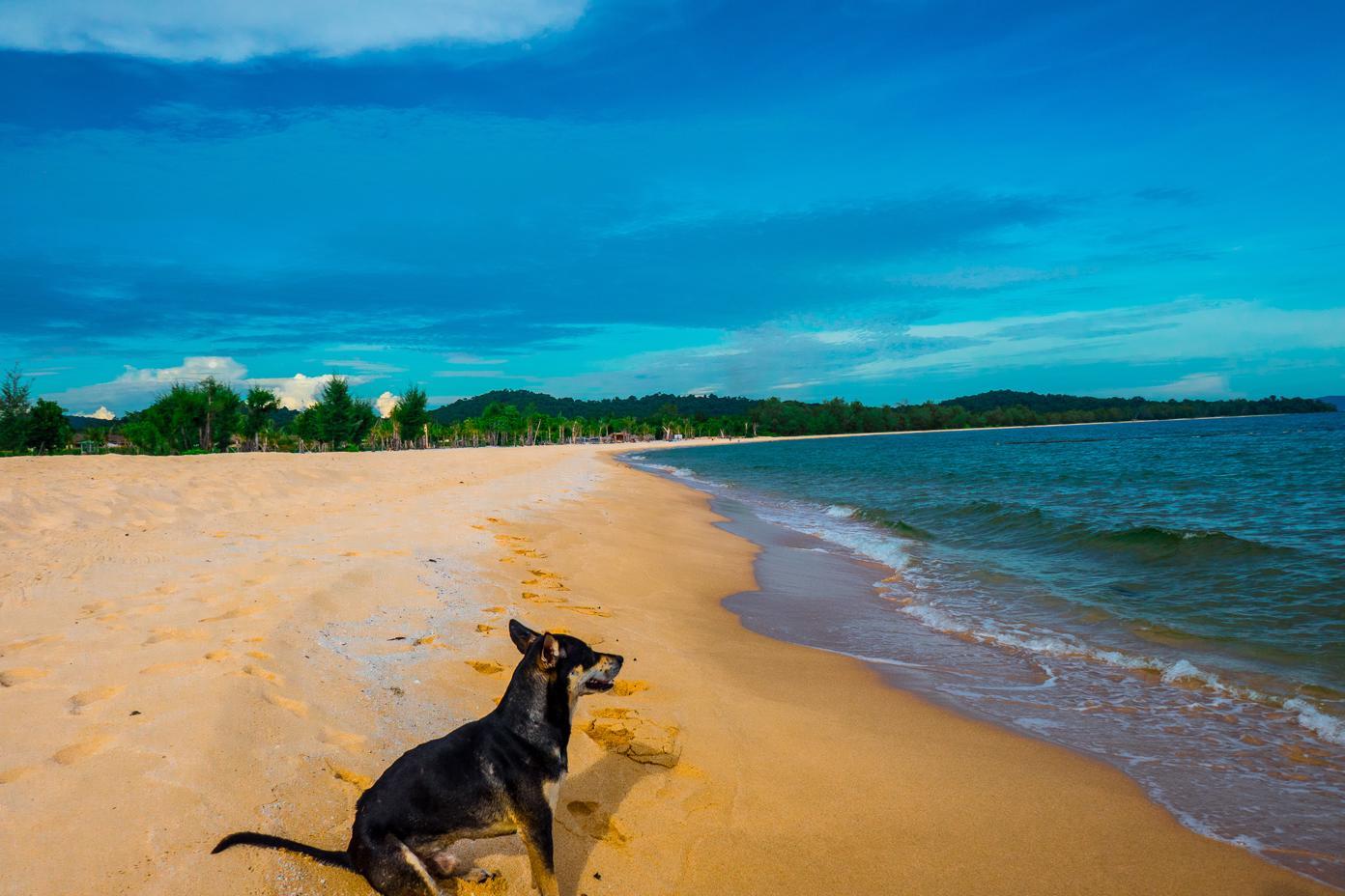 Phu Quoc Island Beaches - Vung Bau Beach where we were joined by 2 local dogs