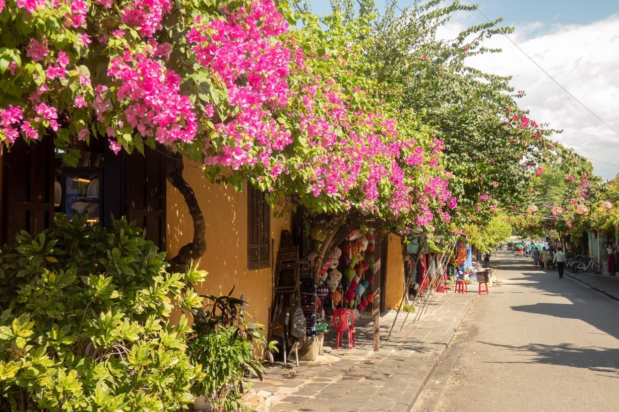 Vietnam travel tips Hoi An Ancient Town streets are lined with beautiful bougainvilleas and yellow walls