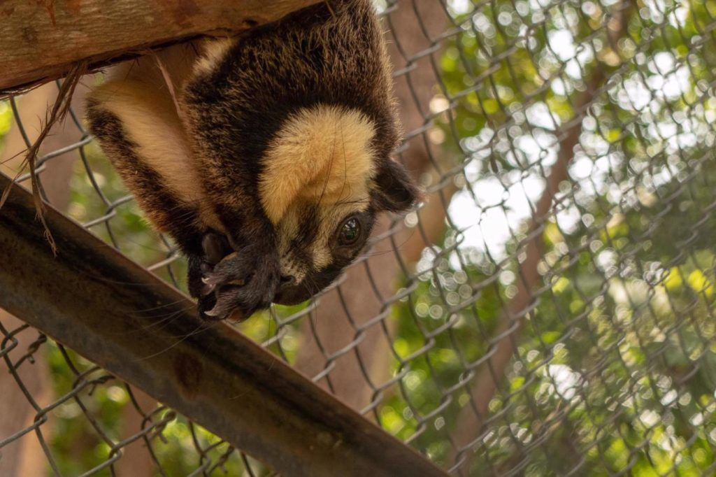 Phnom Penh Zoo Tamao Wildlife Rescue center