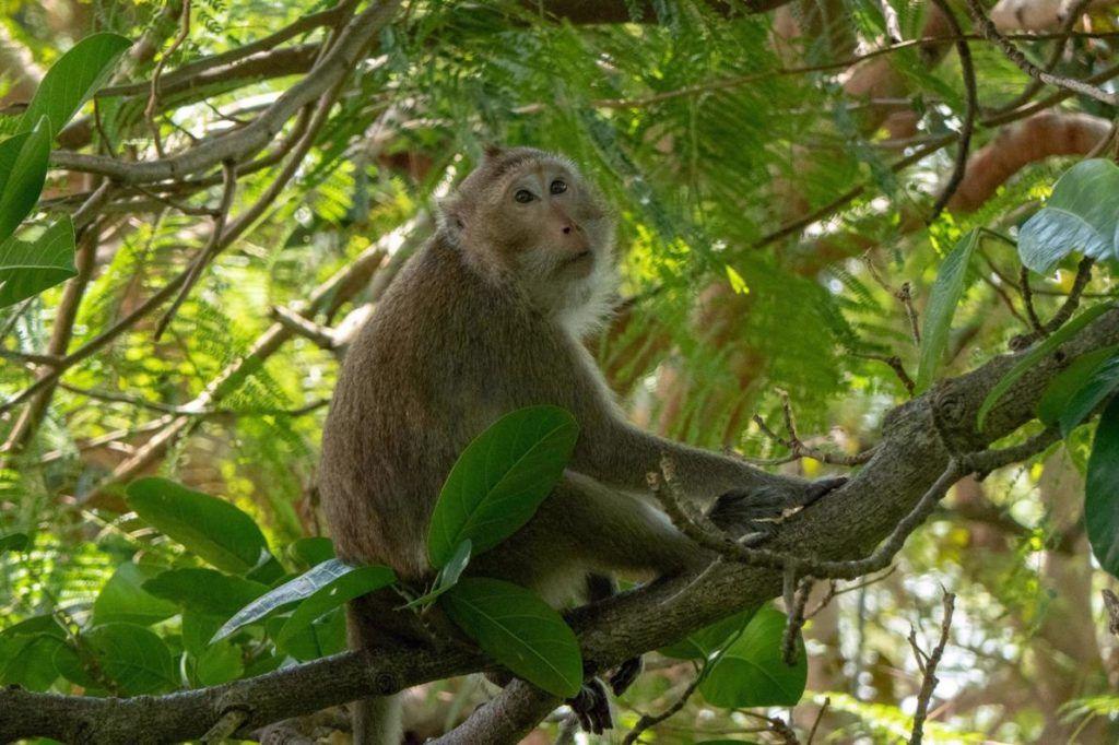 Kep National Park Cambodia Wildlife in Kep National Park Monekeys