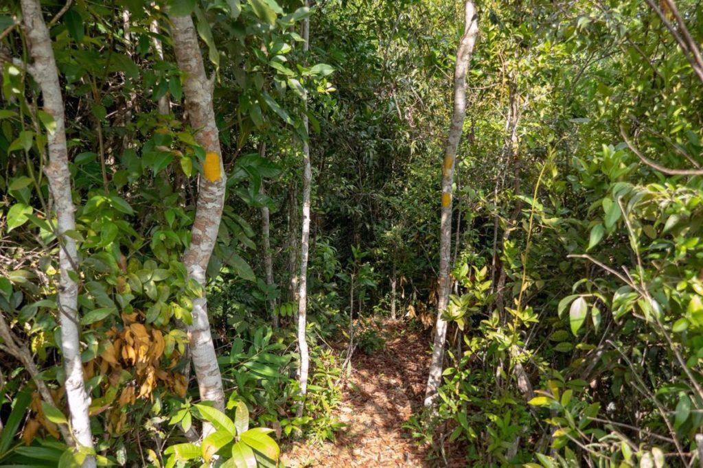 Kep National Park Cambodia Hiking Trails are well marked with yellow paint