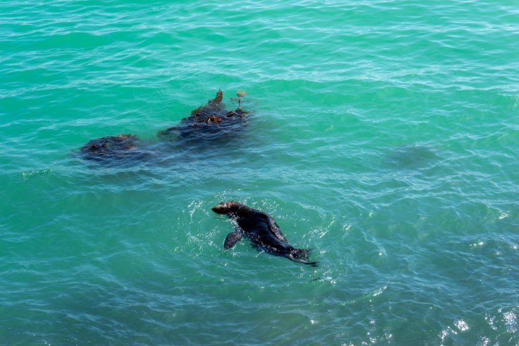 Seals at Omaru outside Dunedin