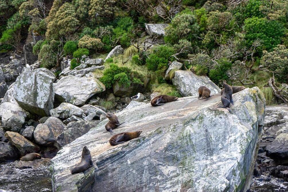 Seals in Milford Sound