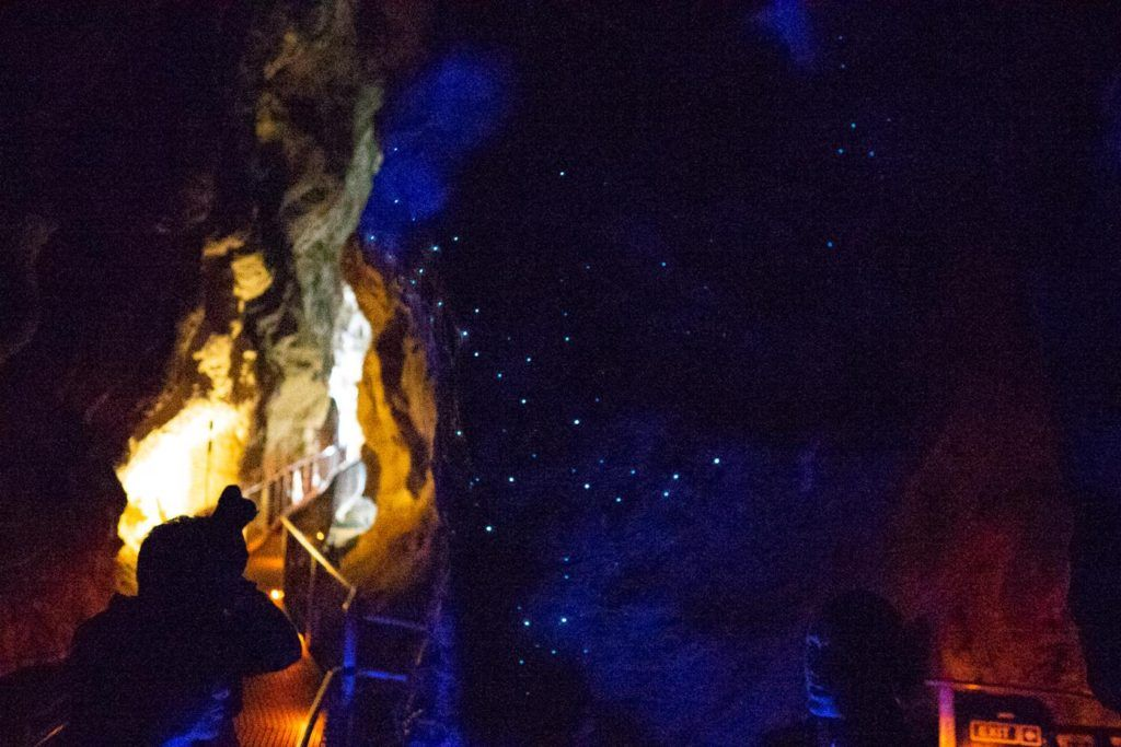 Glow Worms at Waitomo - Best things to do in New Zeealand