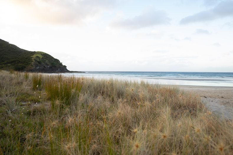 A beach in Northland New Zealand at sunset. Northland is one of the best areas to road trip in New Zealand